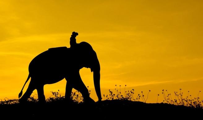 pendleton-elephant-rider-header
